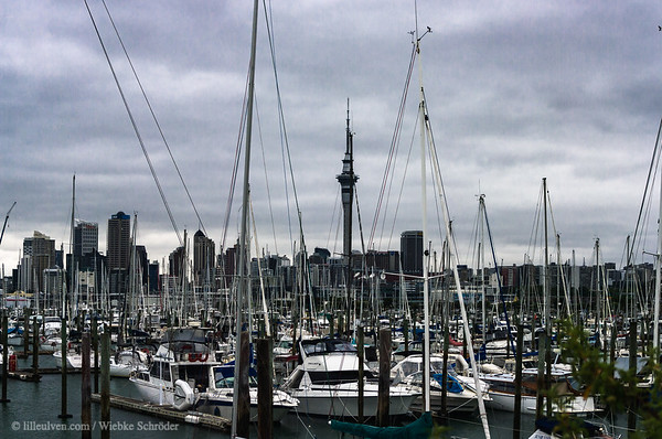 Auckland harbor and skyline