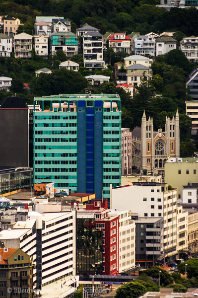 Looking over Wellington from Mt. Victoria