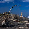 Gollum is fishing at Hokitika Beach, Driftwood Art and Black Sand
