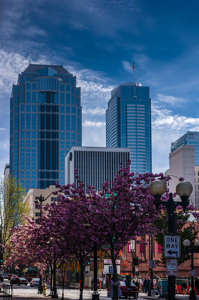 Downtown Seattle with cherry blossoms