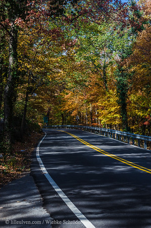 Fall colors on Lookout Mountain