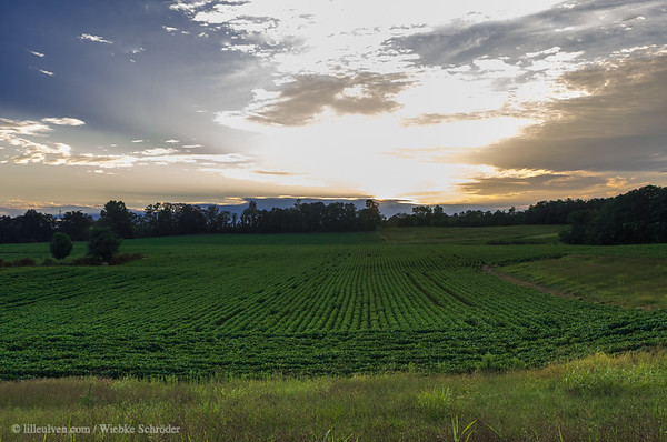 Tennessee fields in the sunset