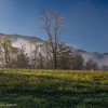 Fog lingering over Cades Cove