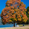 Fall colors at the Chickamauga Dam