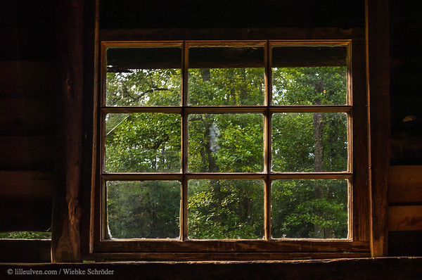 Looking out of Carter Shields Cabin