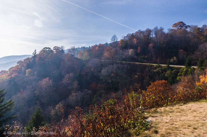 Cut-Off Ridge, Nantahala National Forest