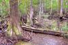 Tri-CountyBiedler Forrest_6890