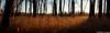 IMG_7527 Panorama