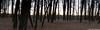 IMG_7492 Panorama
