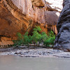 Zion Narrows, Zion National Park, Utah<br /> best print size - 8x12 or 12x18