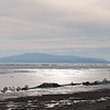 Buckled ice. The Great Salt Lake.<br /> best print size - 8x12 or 12x18