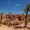 Bryce Canyon<br /> best print size - 8x12 or 12x18