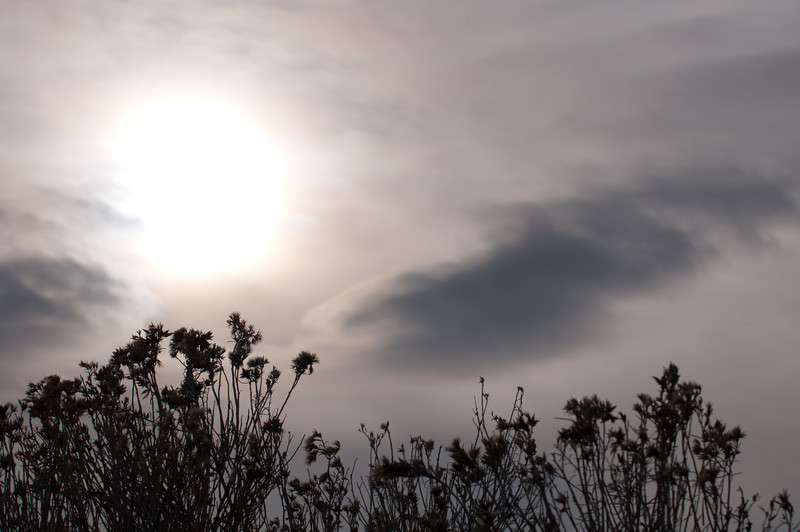 Winter sun. Antelope Island Utah.<br /> best print size - 8x12 or 12x18