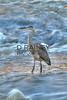 Heron at Falls Park