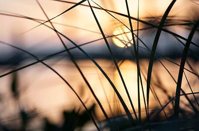 Sunset through the sawgrass.