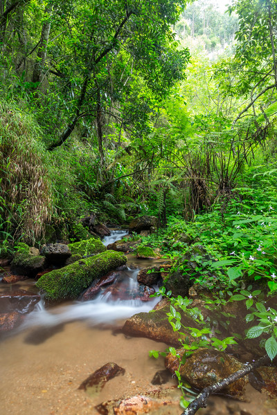 River Close to a Waterfall in Magoebaskloof Forest