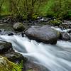 Sweet Creek Trail