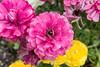 Jesup_Flowers_4723