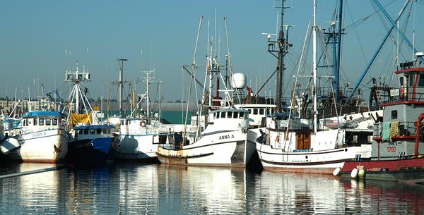 Fisherman's Terminal #1