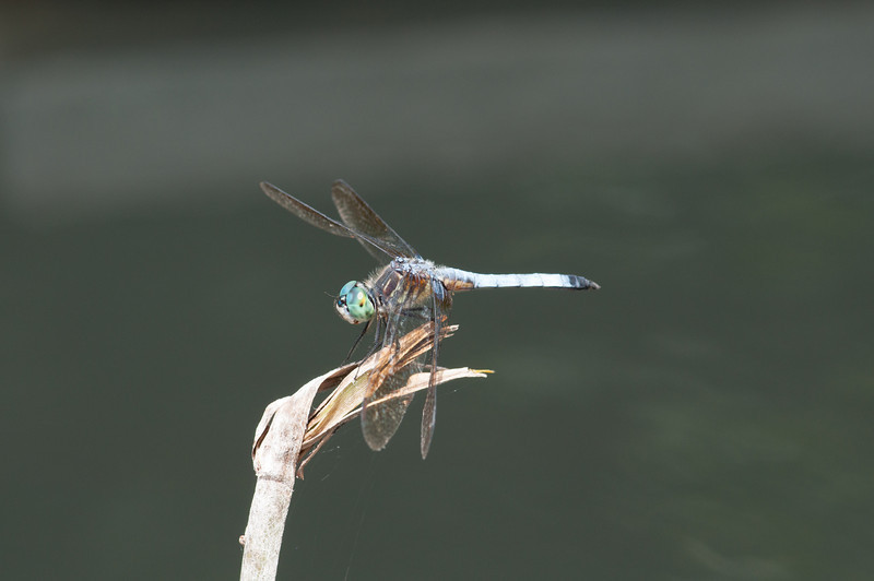 dragonfly<br /> best print size - 8x12 or 12x18