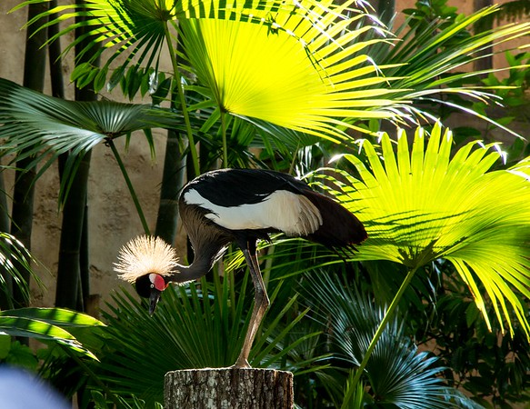 Bird with Palm Trees