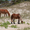 wild horses on the Outer Banks<br /> best print size - 8x12 or 12x18