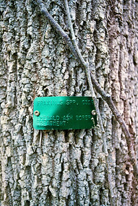 Emerald Ash Borer control experiment at Sugarcreek  Canon AT-1 with 35mm 3.5 FD lens Fuji Superia 400 Developed with Tetenal C-41 Press Kit
