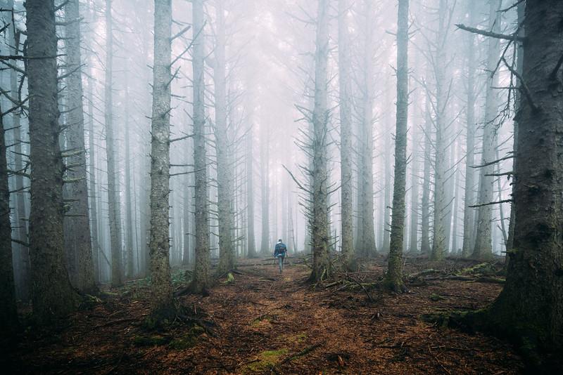 Boardman Forest