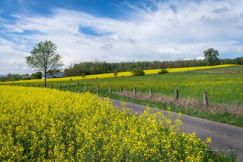 Yellow roads