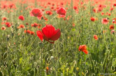 Herdenking 100 jaar Groote Oorlog (3)