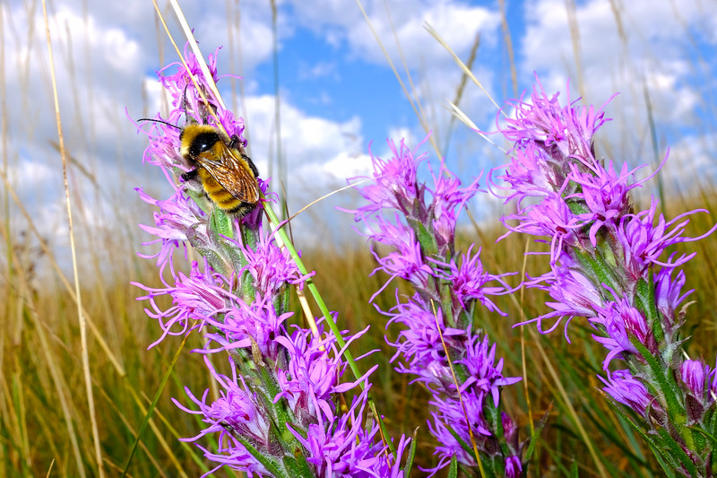Beesness