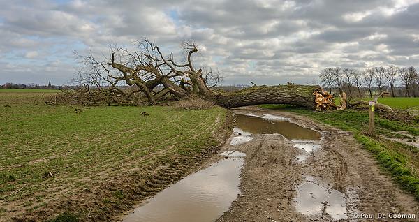 150 jaar oud beschermd monument sneuvelt door Ciara storm (09/02/2020)