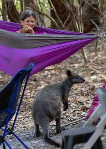 Marsupial Life