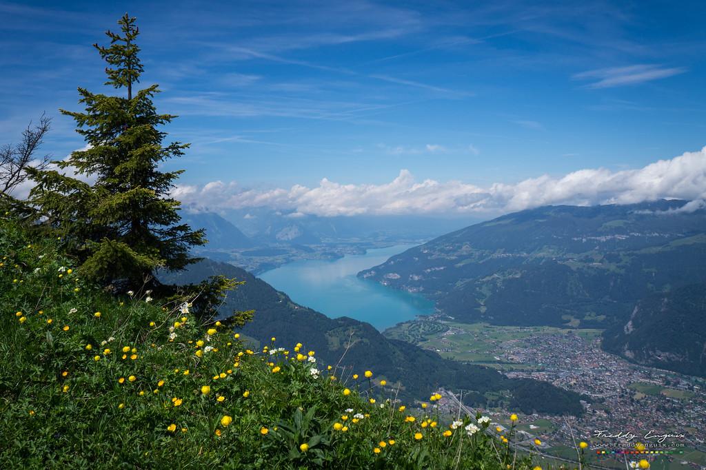 Swiss postal