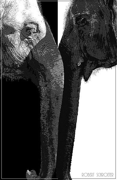 Elephant Ying and Yang