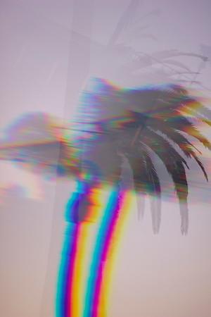 Trippy Palms