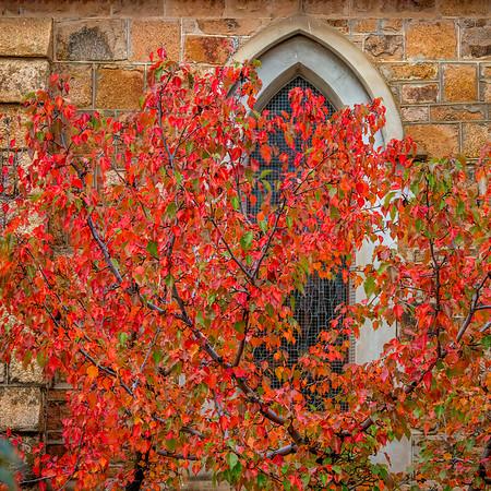Fall Folliage at Christ's Church, Beechworth
