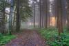 Forest twilight
