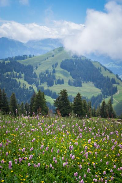 Flowered mountain