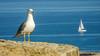 Watching seagull