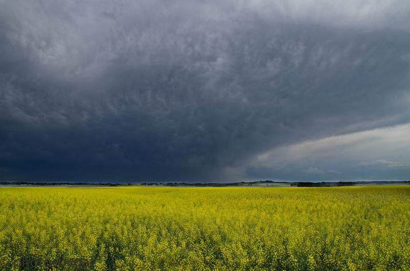 Storm Coming, Alberta