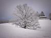 Sunken tree