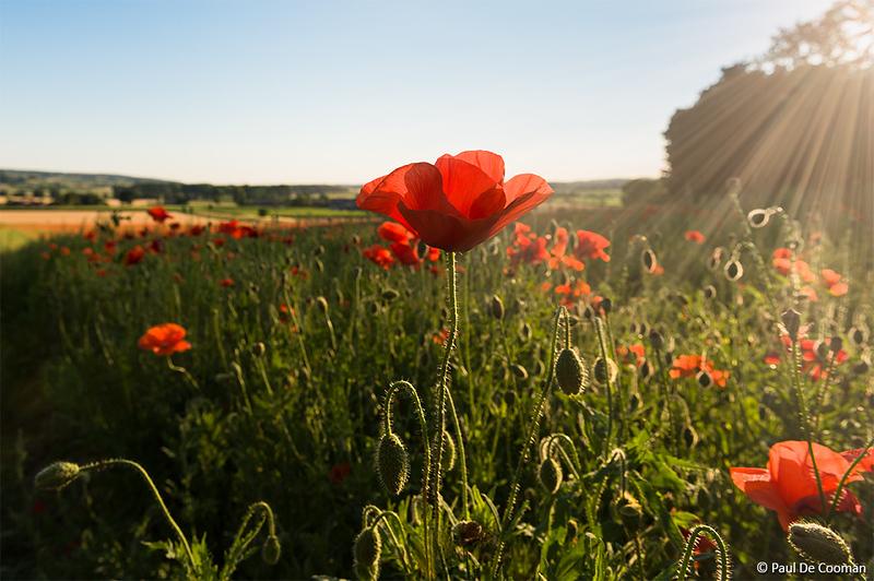 Herdenking 100 jaar Groote Oorlog (4)