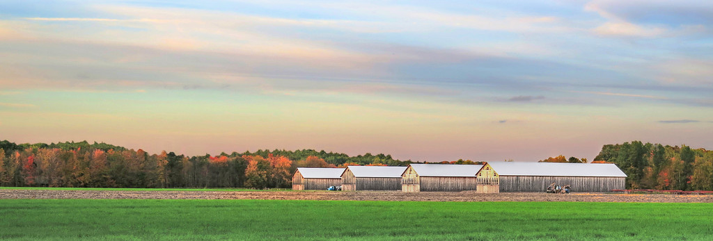 Tobacco Barns at Sunset