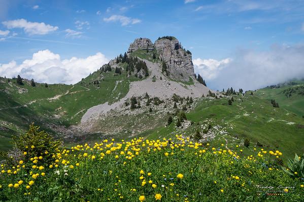 Alpen flowers
