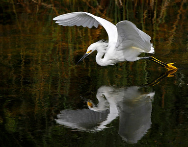 A photo by Pedro Lastra. unsplash.com/photos/Rijk0EJqp-Q