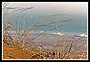 American Beachgrass at Plum Island