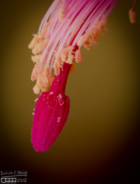 A close-up of the business end of one of the flowers.