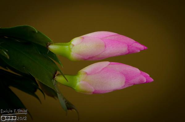 February Flowers Update