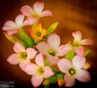 January Flowers Updates